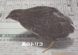 6 ひめちゃん蚊帳散歩写真.JPG