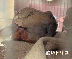 6 モカちゃんのお尻.JPG
