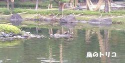 6 白鳥公園写真.jpg