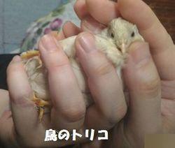 6 足が可愛いましろちゃん.jpg
