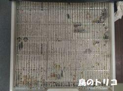 7 2019_05_16 17時38分 ガオちゃんのケージ底写真.jpg