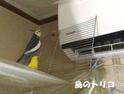 7 2019_08_29 17時24分 エアコンにガオちゃん除け設置 .jpg