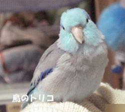 7 ご機嫌蘭丸ちゃん.JPG