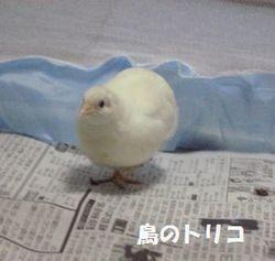 7 ましろちゃん写真.JPG
