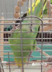 7 放鳥を要求するドリちゃん.JPG