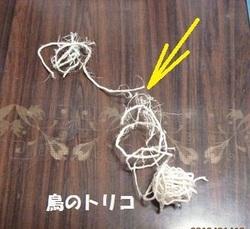 7 破壊された紐.JPG