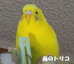 8 プクプクポーちゃん.jpg