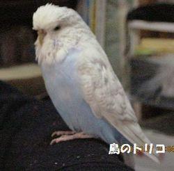 8 放鳥あおちゃん.JPG