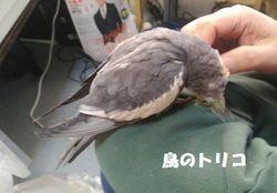 8 甘えっ子ガオちゃん.jpg
