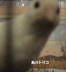 9 ましろのアップ写真.JPG