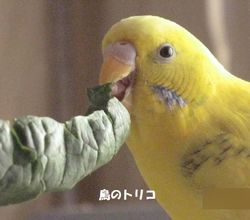 9 上品の食べるポーちゃん.JPG